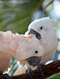 Bello pappagallo variopinto Fotografia Stock