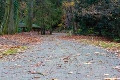 Bello parco in autunno Fotografia Stock