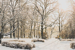 Bello parco nell'inverno Fotografia Stock