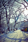 Bello parco nell'inverno Immagini Stock Libere da Diritti