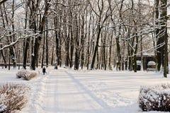 Bello parco nell'inverno Immagine Stock
