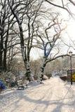 Bello parco nell'inverno Fotografie Stock