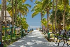 Bello percorso attraverso il giardino tropicale verso Fotografie Stock Libere da Diritti