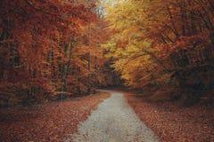 Bello percorso della montagna della foresta di autunno Fotografia Stock Libera da Diritti