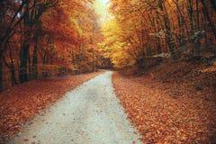 Bello percorso della montagna della foresta di autunno Fotografie Stock Libere da Diritti