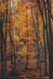 Bello percorso della montagna della foresta di autunno Immagini Stock