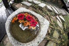 Bello percorso di pietra d'annata del giardino sotto le tonalità di raffreddamento degli alberi ventilati immagine stock libera da diritti