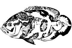 Bello pesce Astronotus dell'acquario illustrazione di stock