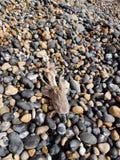 Bello pesce morto Immagini Stock