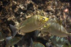 Bello pesce sotto il mare immagini stock