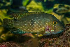 Bello pesce variopinto nel mondo del mare immagini stock libere da diritti