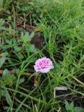 Bello piccolo fiore fotografie stock