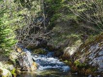 Bello piccolo fiume vicino al oeschinensee nel kandersteg Fotografie Stock Libere da Diritti