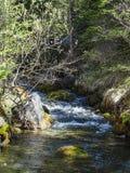 Bello piccolo fiume vicino al oeschinensee nel kandersteg Immagini Stock Libere da Diritti