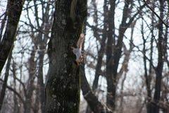 Bello piccolo scoiattolo che salta sugli alberi in tempo soleggiato nel parco della città immagine stock libera da diritti