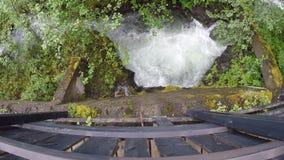 Bello piccolo tramite flusso dell'insenatura dal fiume principale nella foresta di estate video d archivio