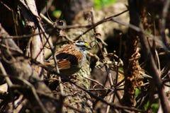Bello piccolo uccello fotografia stock