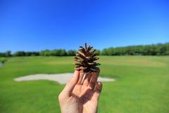 Bello pinecone Fotografie Stock Libere da Diritti