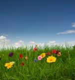 Bello prato con i fiori Fotografia Stock Libera da Diritti