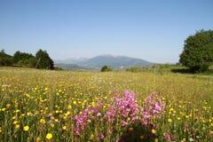 Bello prato con i fiori e la montagna Fotografie Stock