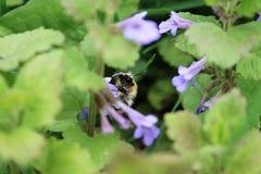 Bello prato con i fiori selvaggi Fotografie Stock