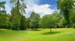 Bello prato coperto di erba nel parco Immagini Stock