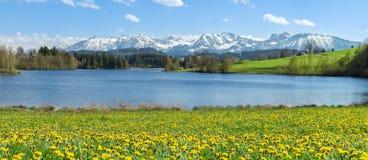 Bello prato del fiore al lago alpino ed alle montagne innevate Immagini Stock Libere da Diritti