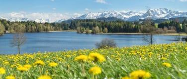 Bello prato del fiore al lago alpino ed alle montagne innevate Fotografia Stock