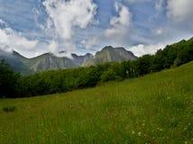 Bello prato della molla circondato dalla foresta al piede delle montagne fotografia stock