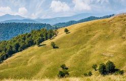 Bello prato erboso alpino in Carpathians Immagini Stock
