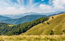 Bello prato erboso alpino in Carpathians Fotografie Stock