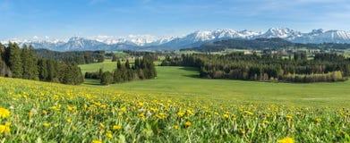 Bello prato giallo del fiore in un paesaggio montagnoso idilliaco Fotografia Stock
