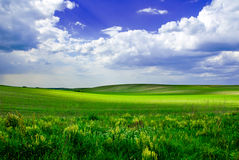 Bello prato verde Fotografia Stock Libera da Diritti