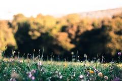 Bello prato verde con i fiori Immagine Stock Libera da Diritti