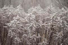 Bello primo piano con i cristalli del gelo sulle piante nella mattina di autunno Fotografia Stock Libera da Diritti