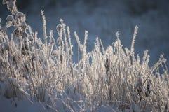 Bello primo piano con i cristalli di brina su erba nella mattina di autunno Immagini Stock