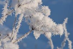 Bello primo piano dei cristalli di ghiaccio al sole Fotografia Stock