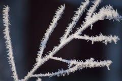 Bello primo piano dei cristalli di ghiaccio sui rami di albero Fotografia Stock