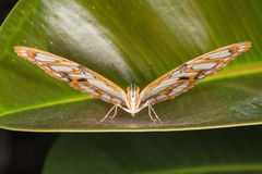 Bello primo piano della farfalla Fotografia Stock