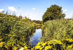 Bello primo piano olandese degli elementi del parco della città Fotografie Stock