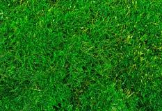 Bello primo piano verde di struttura del muschio, fondo con lo spazio della copia Immagini Stock