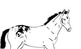 Bello puledro macchiato royalty illustrazione gratis