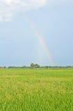 Bello Rainbow sul giacimento del riso fotografia stock libera da diritti