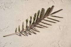 Bello ramo dell'albero con le piccole foglie ed immagine interessante di ombra su fondo grigio concreto immagini stock