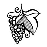 Bello ramo dell'uva Immagine Stock