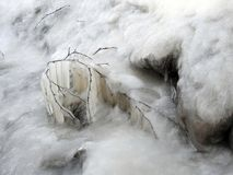Bello ramo di albero della betulla in ghiaccio Immagini Stock