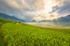 Bello Ray della montagna della luce e la natura nel terrazzo del riso del Vietnam abbelliscono Fotografie Stock