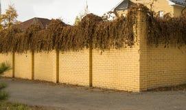 Bello recinto giallo del mattone e piante secche ricce su nella caduta Immagine Stock