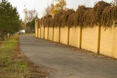 Bello recinto giallo del mattone e piante secche ricce su nella caduta Fotografia Stock