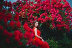 Bello ritratto della giovane donna castana sensuale in vestito rosso vicino alle rose Immagine Stock Libera da Diritti